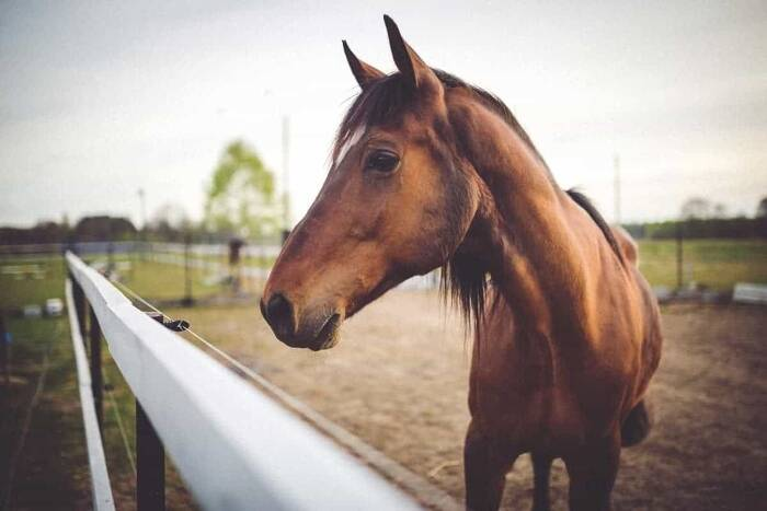 Horse Photography 101