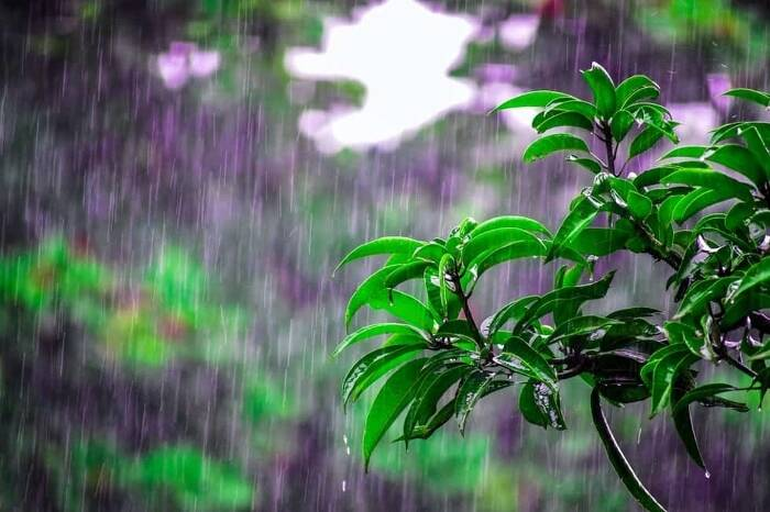 Pitter Patter: Make a splash with spectacular rain pictures