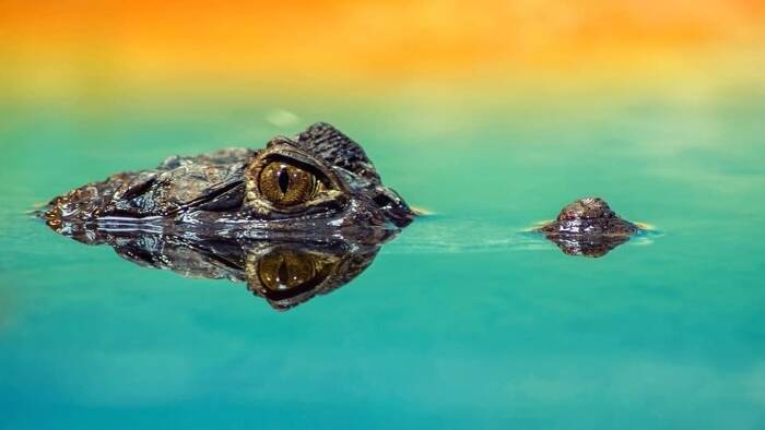 Explore the Best Lenses for Wildlife Photography